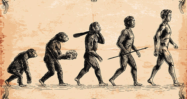 Illustration of human evolution. Photo: iStock.com